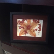 Framed pressed funeral flowers